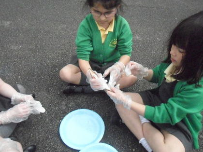 Year 1 T6 Holmes - Fish Experiment