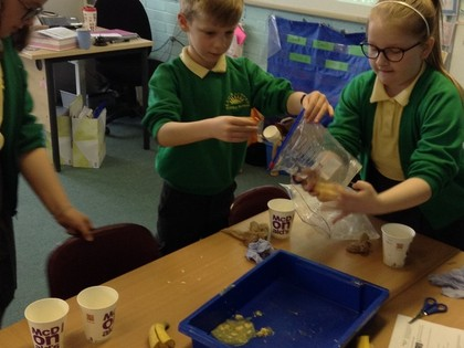 Year 4 T4 Science - Digestive System